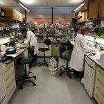 labwork-research